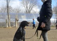День любителей охотничьих собак!